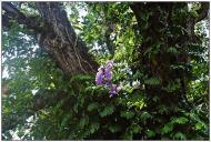 Springtime in Bukidnon