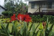 Flora Series: Lirio
